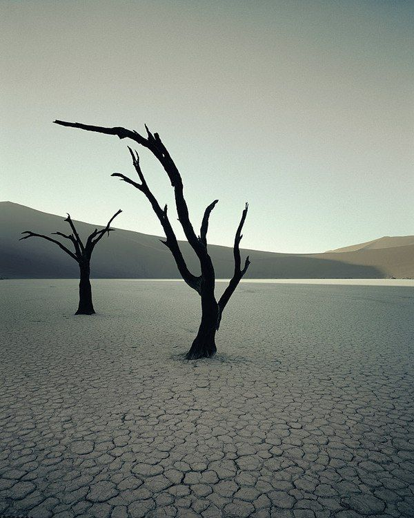 Namibia Himba tribe tree photo