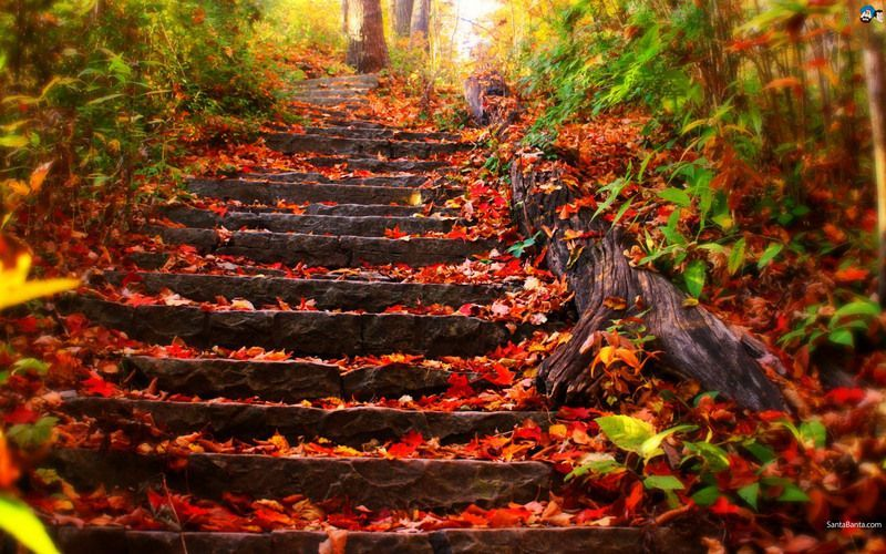 Autumn stairs path