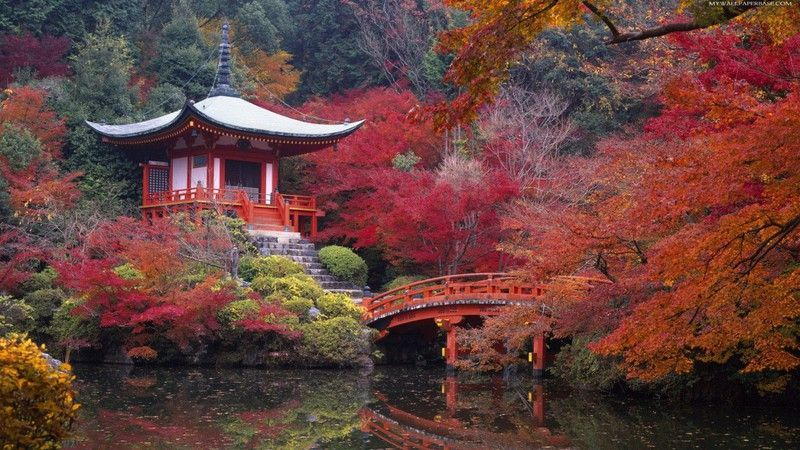 Japanese tea house bridge autumn