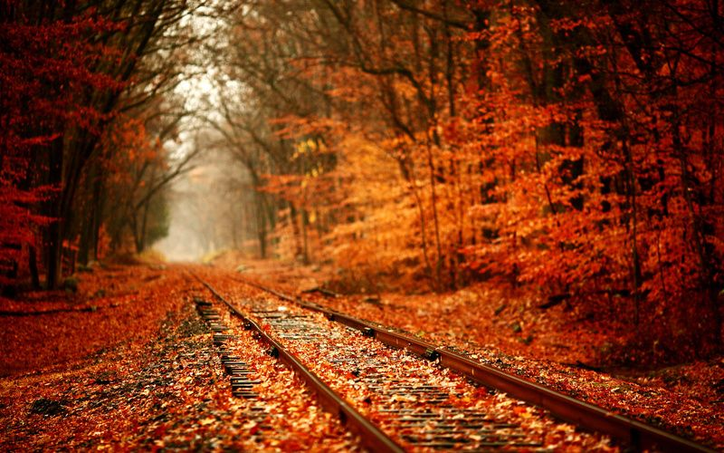 Train tracks autumn