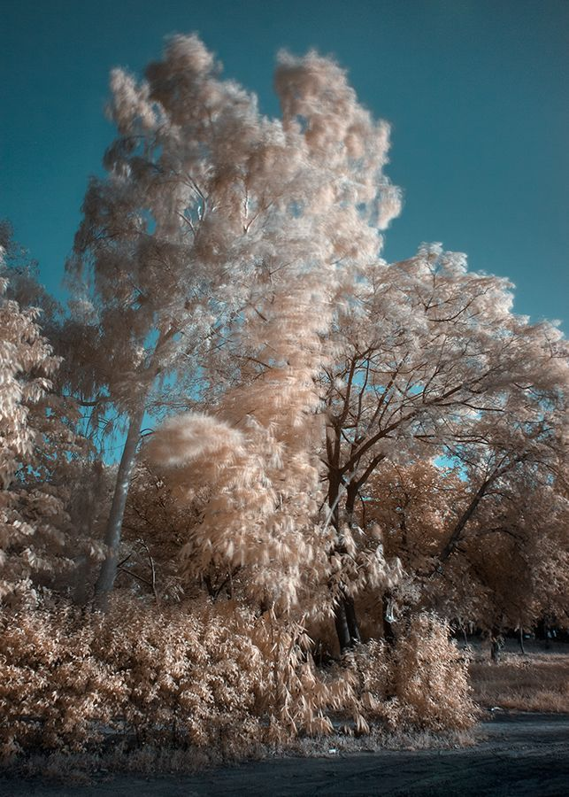 Infrared trees sky