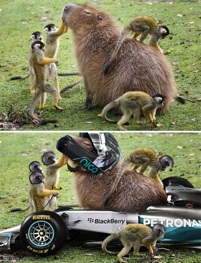 Photoshop fun capybara pit stop