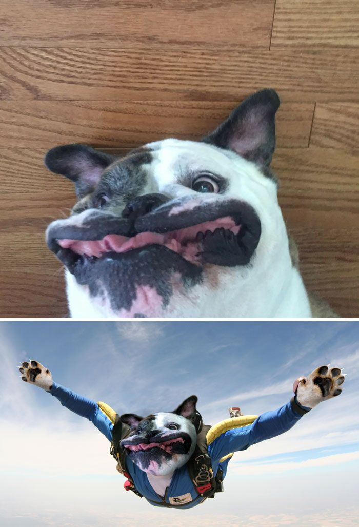 Photoshop fun dog face while sky diving