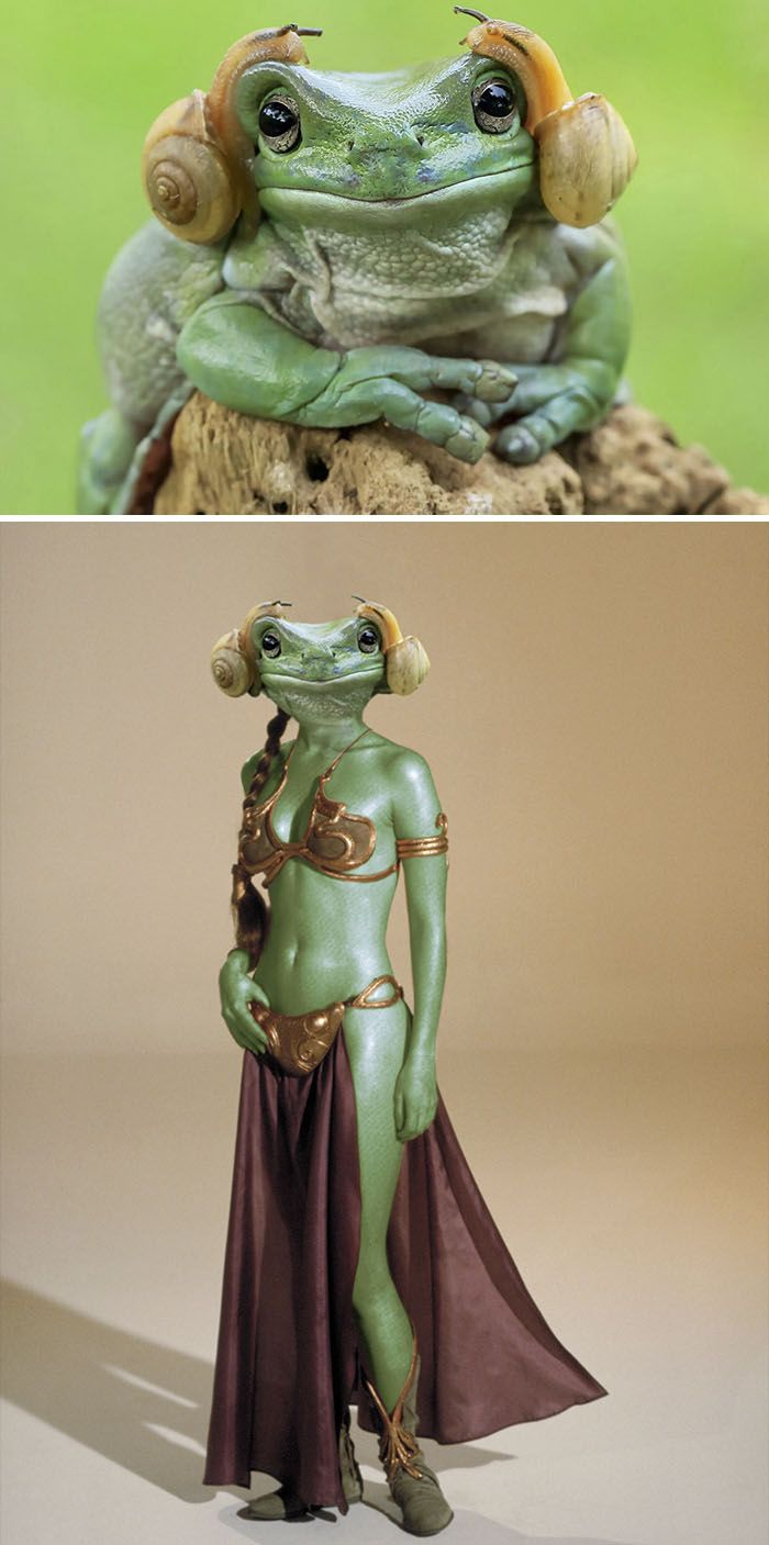 Photoshop fun Princess Leia frog
