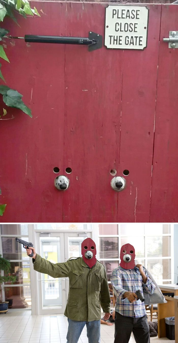 Photoshop fun masked dogs