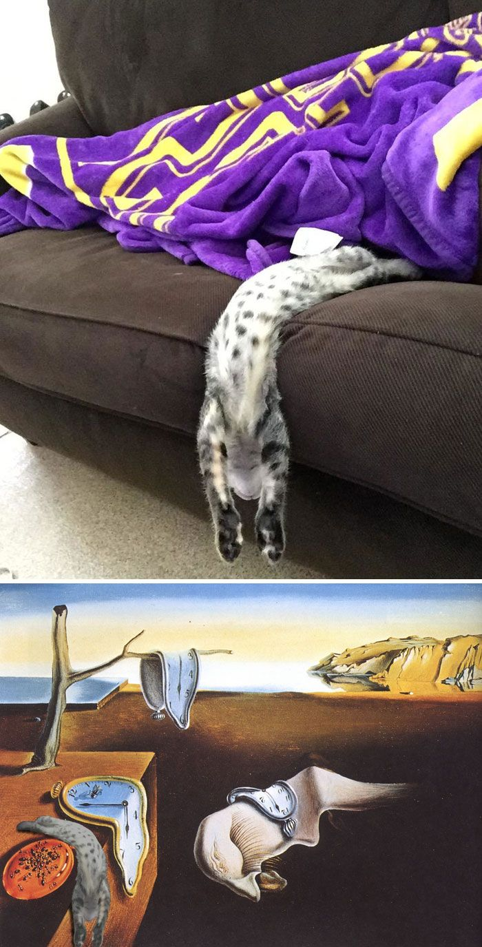 Photoshop fun the persistence of memory by Dali cat